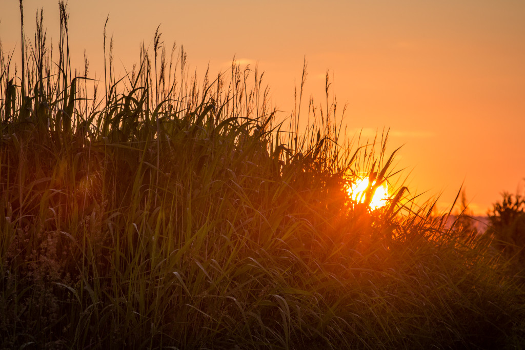 Sunset_June-3319