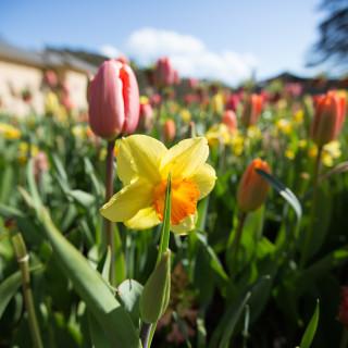 Spring flowers-6427